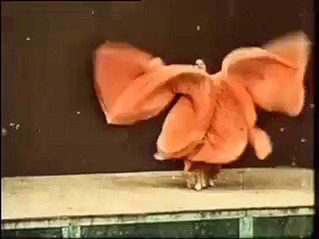 danse-serpentine-loie-fuller